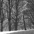 Winter Trees: From Becoming Unbecoming by ThingsbyUna