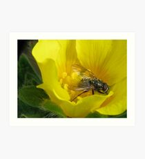Fly on Flower Art Print