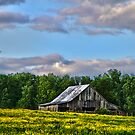 """""""Old Country Barn, With Spring Green Trees & Field of Yellow Flowers"""" by Melinda Stewart Page"""