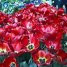 flowers in Winter gardens Auckland by Camelot