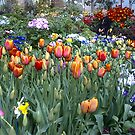 Flowers -Winter gardens Auckland by Camelot
