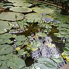 Water Lilies in Winter garden Auckland by Camelot