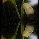 Reflective Rainy Orchid by Al Bourassa