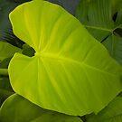bright green leave by Mariella Rivera