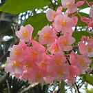 pink by Mariella Rivera