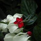 white and red flower by Mariella Rivera