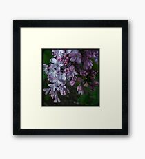 Purple Lilac TTV Framed Print