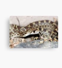 Forked Canvas Print