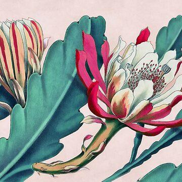 Flowering cactus by CatyArte