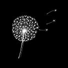 Dandelion clock on black by Maddy Bennett
