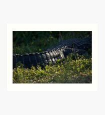 Gator Tail Art Print