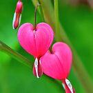 Bleeding Heart  by Nancy Barrett