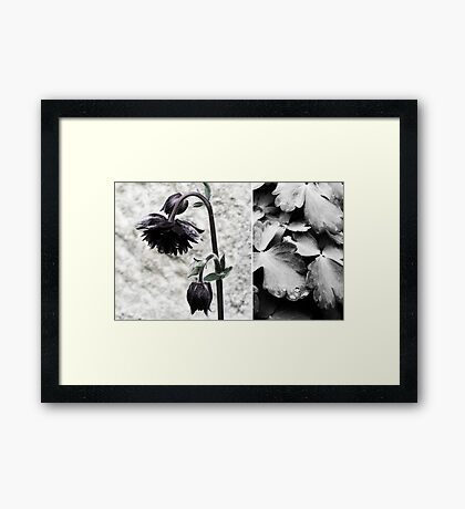 almost black Framed Print