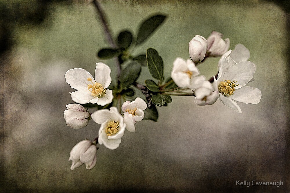 spring has sprung by Kelly Cavanaugh