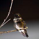 Black-chinned humming bird 2 by flyfish70