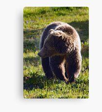 Grizzly Bear   #4101 Canvas Print