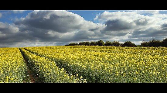 Rape field by james  thow