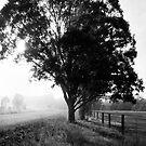 morning fog by Katherine Williams