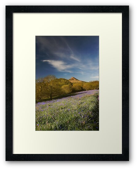 The Bluebells at Roseberry Topping by james  thow