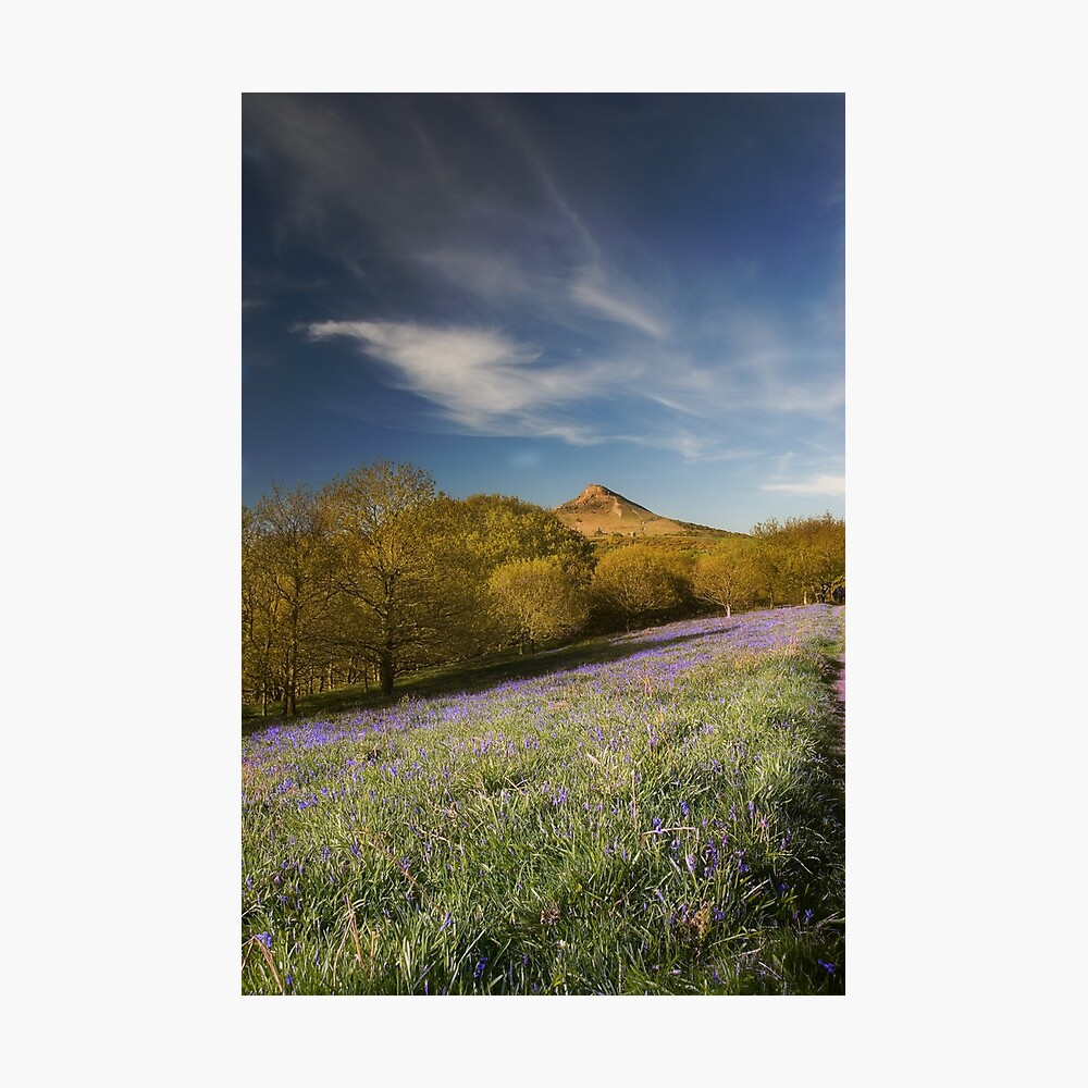 The Bluebells at Roseberry Topping Photographic Print