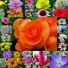 Flower Power by maf01