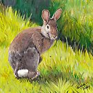 Cottontail by Charlotte Yealey