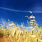 Dry Grass and Blue Skies by ArtistShore