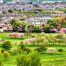 Cherry Blossoms by Tom Gomez
