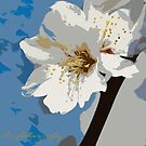 Almond Blossom Solo 2 by Bryan W. Cole