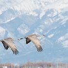 Sandhill Cranes in San Luis Valley by Eivor Kuchta