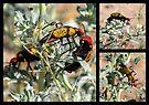 Iron-Cross Blister Beetle ~ Collage by Kimberly Chadwick