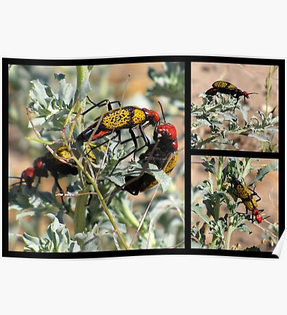 Iron-Cross Blister Beetle ~ Collage Poster
