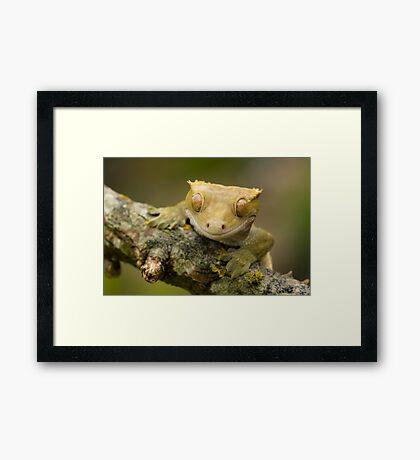 The happy gecko Framed Print