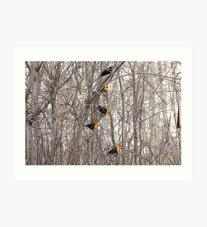 All Blackbirds Art Print