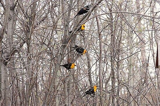 All Blackbirds by Leslie van de Ligt