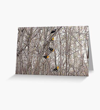 All Blackbirds Greeting Card