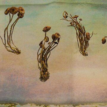 Schwarze beliebte Pilze von PictureNZ