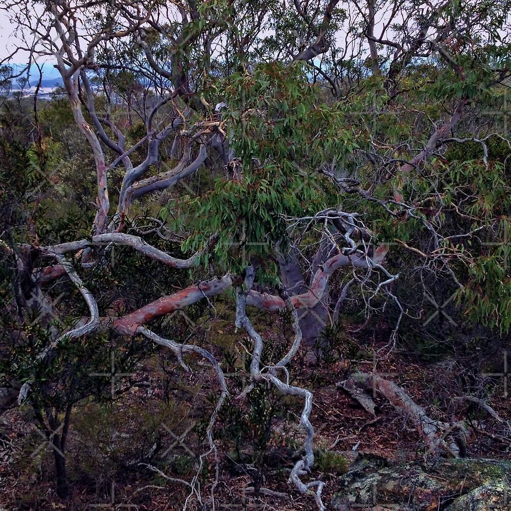 Twisted Tree by Deborah McGrath