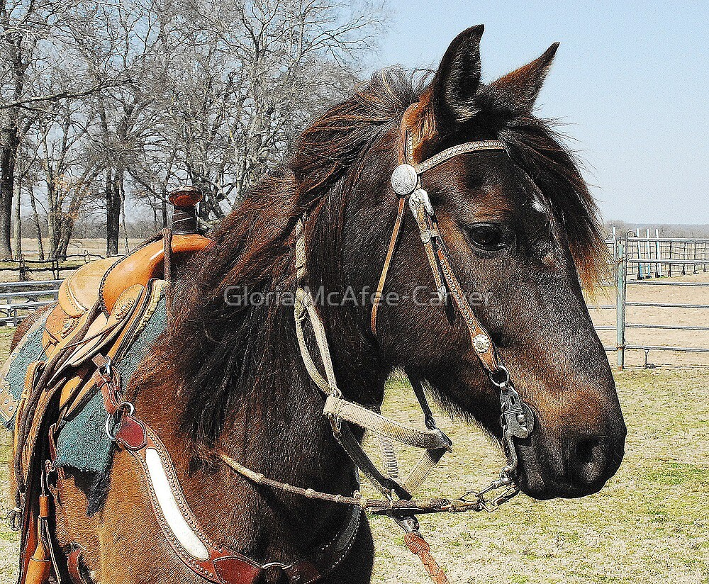 Peruvian Paso @Wood Guest Ranch, Oklahoma by Gloria McAfee-Carver