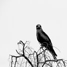 Go Fly A Kite by PhoenixArt