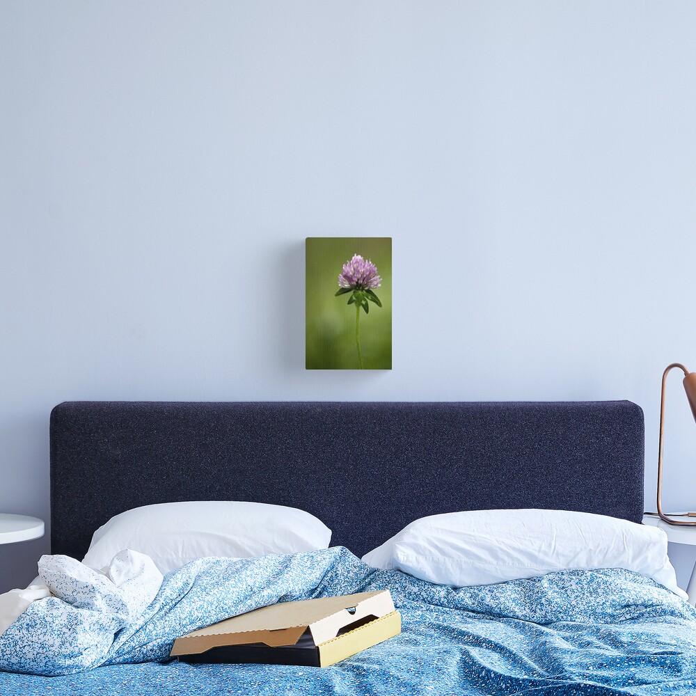 Clover in Springtime Canvas Print