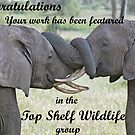 Top Shelf Wildlife Feature Banner by Adrian Paul