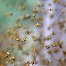 Arachno-nursery 1 by David Clarke