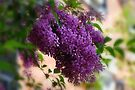 Lilacs  by Elaine  Manley