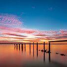 A Sea of Orange - Cleveland Qld Australia by Beth  Wode