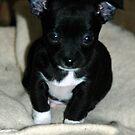 Little Fella by annofsilhouette