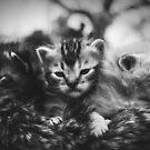 «Gatitos» de Rebeca Saray