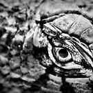 jurassic eye by gompo