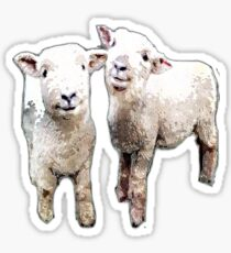 Two Sheep bywhacky Sticker