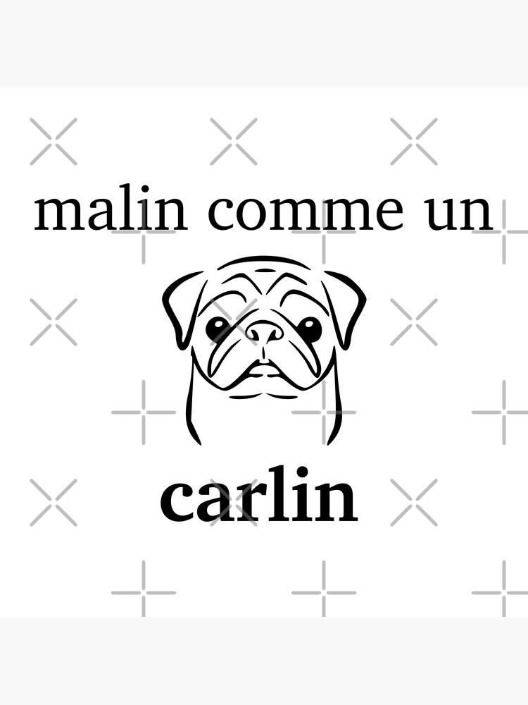 inteligente como Carlin de f1006